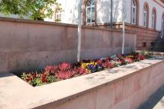 2aVerschönerung-Herbstpflanzung-KiTa-2019-04-20-Frühjahrsaspekt3
