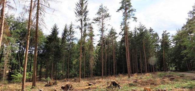 KVS startet mit dem Familienwald